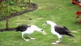 Смешные видео про животных. Самые смешные видео про животных, со всего рунета