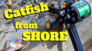 Using Demon Dragons from SHORE | Catching Channel Catfish from Bank