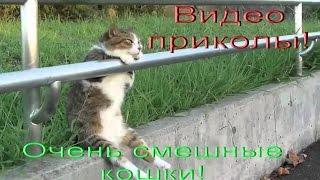 Новые очень смешные видео приколы про кошек! Подборка №9!