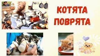 Мы веселые котята мы котята поварята