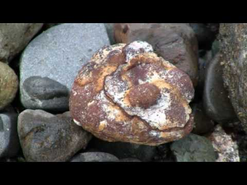 Earth Geology, Rocks, Stone, Minerals Part 3 of 4 - Nature Ecosystem of Western N America