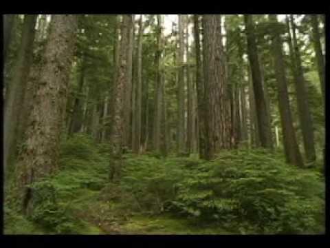 Olympic and Mt. Rainier NP