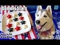 4th of July Gummy Dog Treats Fruit Stars    DIY Dog Treats Recipe 103