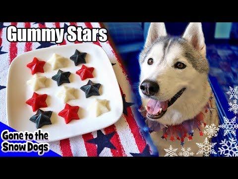 4th of July Gummy Dog Treats Fruit Stars |  DIY Dog Treats Recipe 103