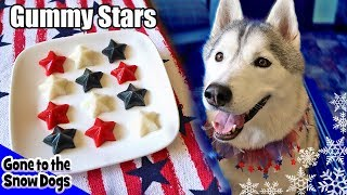 4th of July Gummy Dog Treats Fruit Stars |  DIY Dog Treats Recipe 103