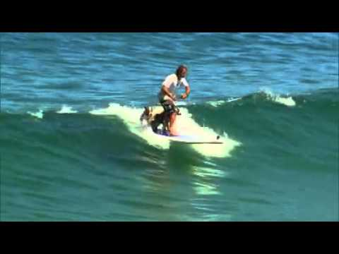 Sup Dog - Stand Up Paddle Surf com cachorros