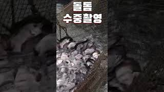 [수중촬영]좌대낚시 돌돔 지렁이미끼 반응? #short…