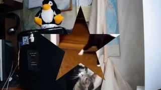 Кот посудомойка и другие смешные видео про кошек(, 2014-06-11T10:35:29.000Z)