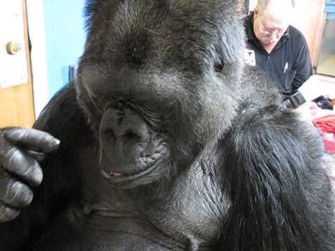 Koko Models Forgiveness