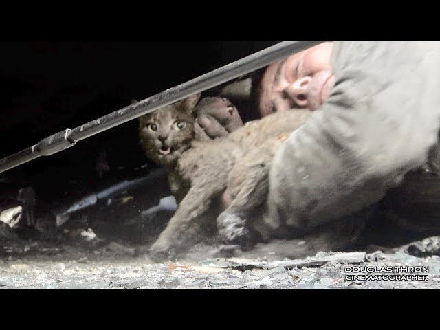 Paradise California Camp Fire Cat Rescue 2018 by Shannon Jay & Douglas Thron