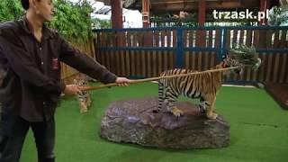 Królestwo Tygrysów, okolice Chiang Mai,  Tajlandia