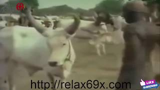 Video African Primitive Tribes Rituals and Ceremonies Part 7 Arbore Tribe, MURSI TRIBE, Hamar Ethiopia download MP3, 3GP, MP4, WEBM, AVI, FLV September 2018