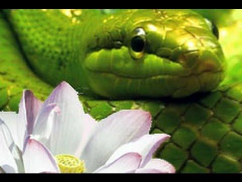 Mundos Internos, Mundos Externos. Tercera parte: La serpiente y el loto