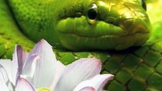 Mundos Internos, Mundos Externos : Tercera parte: La serpiente y el loto