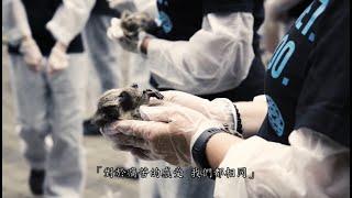 2018世界動物權日官方活動影片 National Animal Rights Day (NARD) Official Video