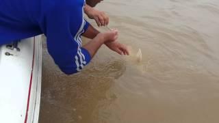 Pesca Con Tarros En Parana