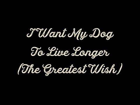 """""""I Want My Dog To Live Longer (The Greatest Wish)"""" – Dog Video #1"""