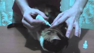 Профилактика блох и глистов у кошки