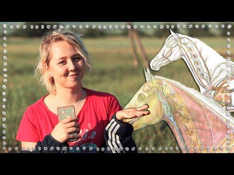 ЭТО ДОЛЖЕН ЗНАТЬ КАЖДЫЙ КОННИК| Интересные факты про лошадей