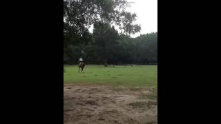 Fox Cross Country Schooling