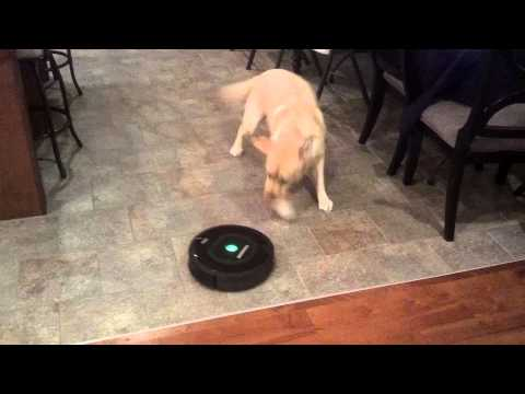 IRobot Roomba 770 and our Dog