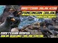 Masteran Jalak Kebo Gacor Pancingan Jalak Malas Bunyi  Mp3 - Mp4 Download