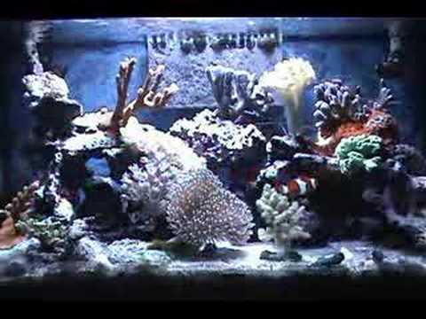 My 10 gallon reef aquarium youtube for Saltwater fish for 10 gallon tank
