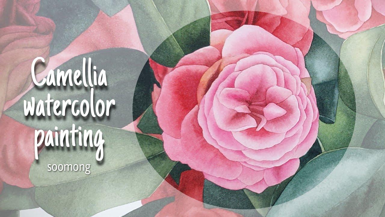 camellia watercolor painting-soomong