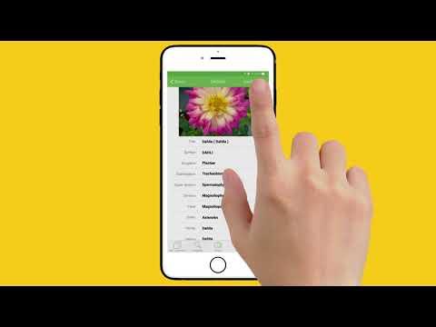 PlantSnap iPhone instructional video - landscape