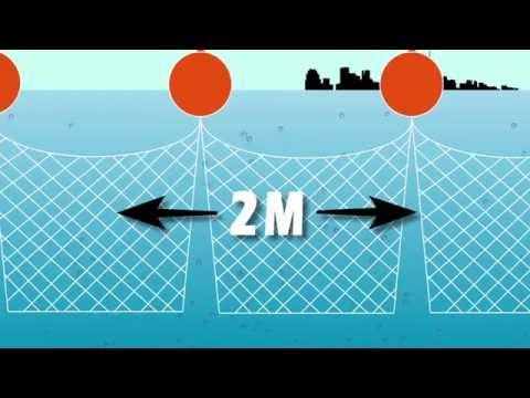 Gold Coast Shark Nets Motion Graphic