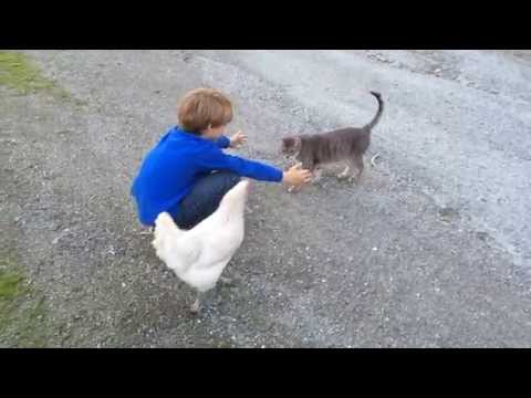 No Hugs for Kitty!