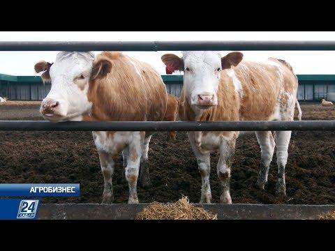 Развитие отрасли мясного животноводства: проблемы и решения | Агробизнес