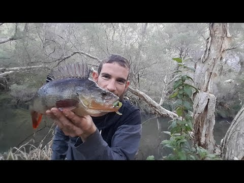 Redfin Lurching - Perth Freshwater Vlog #2