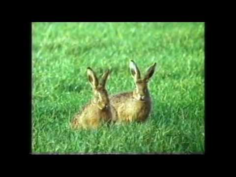 Shadow of the Hare (without disgusting Hare Coursing scenes)