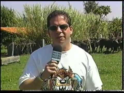 Aldo Grisi primeiro criador de Miura do Brasil,trazidos do Mexico e USA em 1996