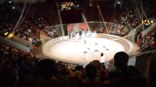 цирк в кемерово! шоу слонов великанов!
