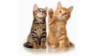 Домашние кошки (рассказывает Ангелина Сиротина)