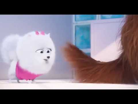Super Reliable Broadband engineers in Sheffield  – The Secret Life of Pets – Gidget 'Dance Party'