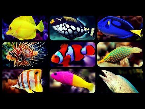 TYPES OF SALTWATER AQUARIUM FISH | CORAL REEF TANK FISH | SHARKS | PUFFERS | CLOWNFISH