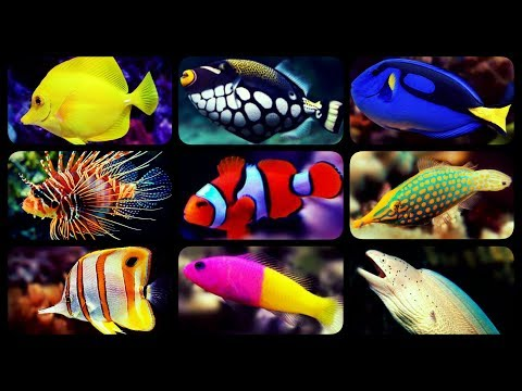 TYPES OF SALTWATER AQUARIUM FISH | CORAL REEF TANK FISH | SHARKS | PUFFERS | CLOWNFISH