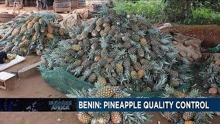 Les producteurs d'ananas au Bénin retouvent le sourire après quelques mois d'incertitude…