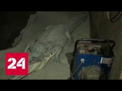 Вести. Дежурная часть от 19 января 2018 года (21:30) - Россия 24