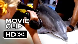 Dolphin Tale 2 Movie CLIP - When That Truck Arrives (2014) - Harry Connick, Jr Dolphin Drama HD
