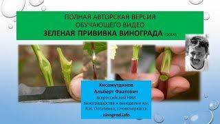 Полная авторская версия обучающего видео Зеленая прививка винограда, Хисамутдинов АФ