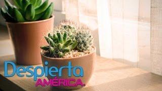 Los Cactus Y El Feng Shui Cómo Colocarlos Para Atraer La Buena Suerte Youtube