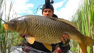 Вот это рыбалка Дикая рыба рвет снасти Ловля амура и сазана на удочку с боковым кивком КОНКУРС