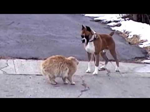 Собака против кошки