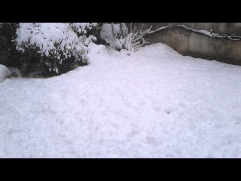 Scooby delle nevi