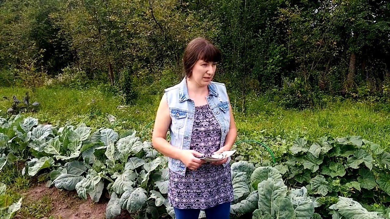 Как избавиться: крестоцветная блошка, слизни и гусеницы на капусте. Мифы интернета и реальность