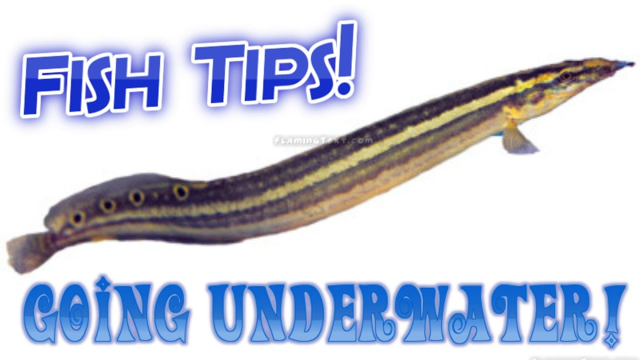 Fish tips 55 gallon aquarium talking about how i take for How to take care of fish tank